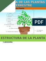 Anatomia de Las Plantas Terrestre