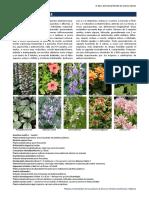 Flora Ornamental de Murcia. Familia Acanthaceae