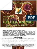 Celula animal.pptx