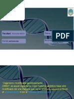 Clase Biotecnología - Alimentos Transgenicos