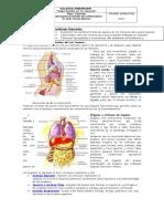 Guia de Aprendizajenb3 Sistemas Del Cuerpo Humano1