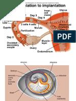 Multiple Pregnancy2.pptx