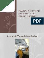 Resistencia a Glifosato en Bolivia El Mundo 2015 Abril 2016