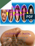 etapasdeldesarrollohumano-120504111141-phpapp01
