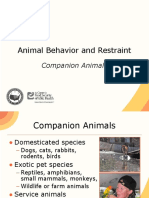 Animal Behavior Restraint