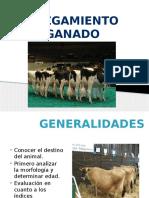 245503956 Juzgamiento Vacas Lecheras