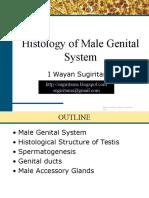 Male Genital System Histology 2012