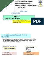 Tracto Corticoespinal
