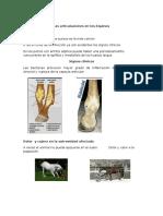 Caballos Clinica