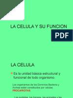 la-celula-y-su-funcion1-2.ppt