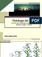 Fisiología Del Maíz