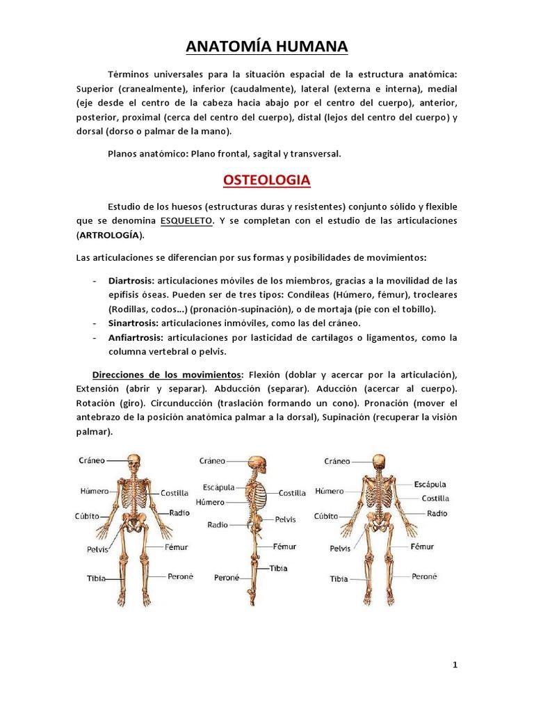 Anatomía de la cabeza y cara