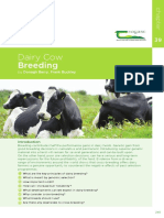 Breeding Cow