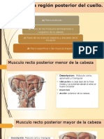 Diapositiva Músculos Anteriores Del Cuello