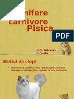 Pisica_mamifer_carnivor