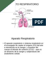 Power Point Sobre el Aparato Respiratorio