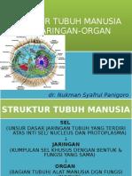 Struktur Tubuh Manusia, Sel-jaringan-Organ