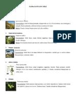 Flora Nativa de Chile(Imagenesarboles)