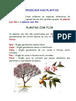 diversidadenasplantas5º.pdf