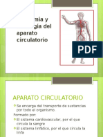 Sistema Circulatorio diapositiva
