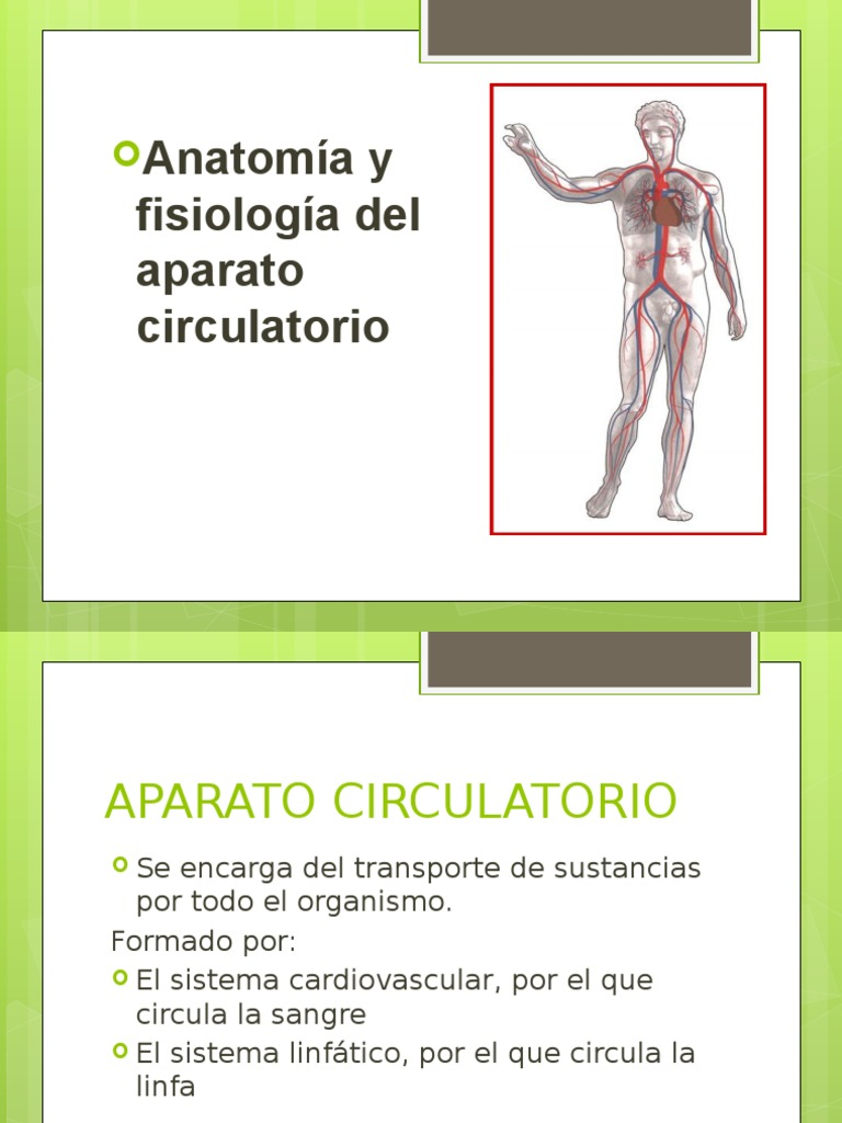 Sistema Circulatorio diapositiva