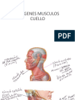 Musculos Del Cuello Con Referencias