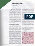 4-nucleo-celular2.pdf