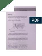 Polarização da Luz.pdf