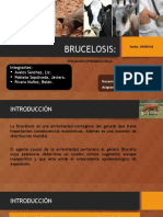 Brucelosis de los animales domésticos y el hombre.