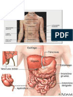 Anatomia Cavidad Abdominal