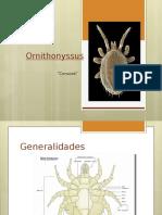 Ornithonyssus
