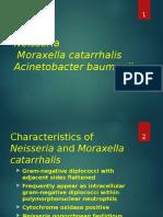 Neisseria_Moraxella_Acinetobacter