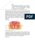 anatomi anorektal