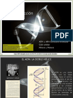 07 Reproducción Adn,Arn,Ciclocel (26 Mapa Conceptual)