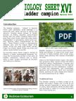 Rockrose Ecotourism-Ethnobiology Sheet 16 Bladder Campion