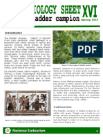 Rockrose Ecotourism-Ethnobiology Sheet 16 Bladder Campion