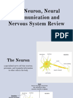 the neuron neural communication and nervous system review