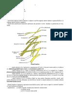 plexul lombar +sacral.docx