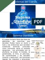 9. SistemaGlandular 1