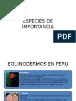 Especies-De-importancia de Equinodermos
