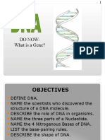 DNA Stucture LE
