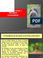 OVITRAMPAS PREPARACION