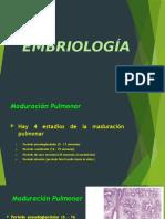 Maduración Pulmonar - Seudoglandular, Canalicular y Sacos Terminales - Malformaciones Congénitas