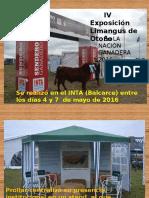 IV Expo Limangus Otoño. Balcarce 2016