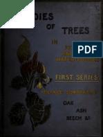 Studies of Trees Fi 00 Need