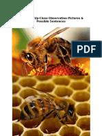 Bee Possible Sentences