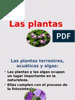 Las Plantas AcuyAticas 5