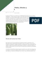 Cactus San Pedro.doc