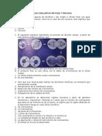Taller Evaluativo Mitosis y Meiosis