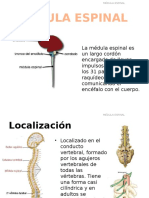 Anato de Medula